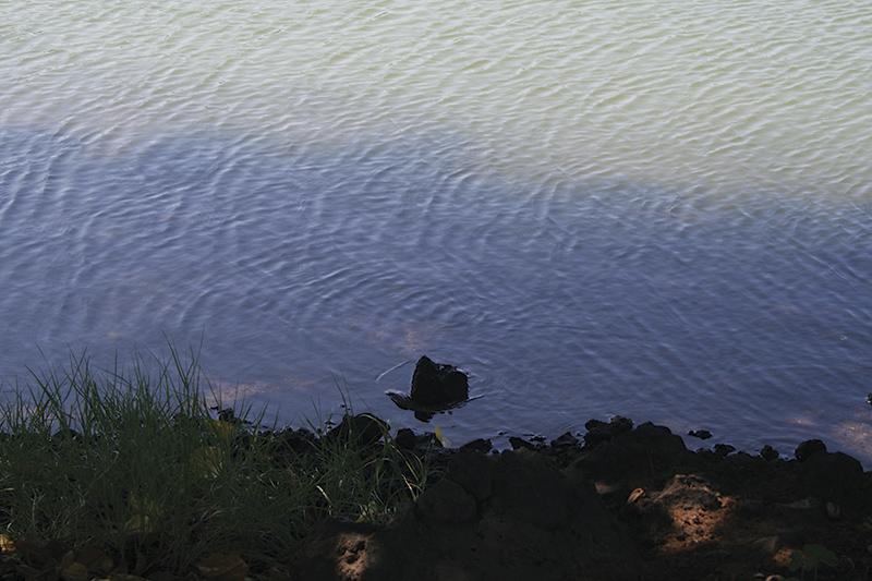 赤ちゃんの変身伝説が残る「ウナギ池」。本当にウナギがいた
