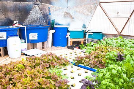 一定の水を循環させて食物を育てるシステム(solar day)