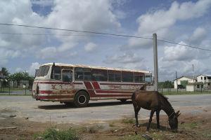 首都を離れると、とたんに牛や馬の姿が目立ち出す