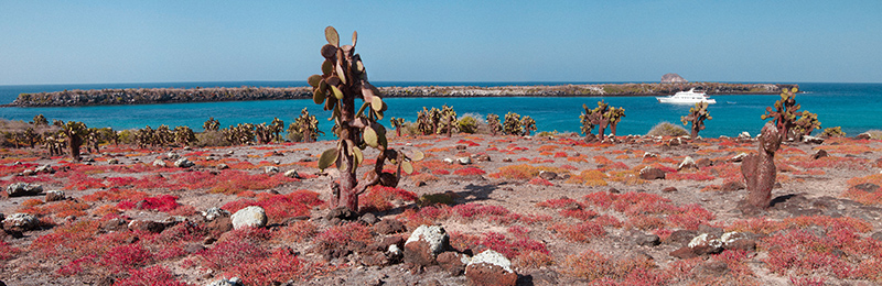 セスビュームの赤い絨毯とウチワサボテンのサウスプラザ島