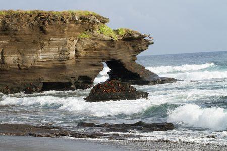 岩にびっしりくっついたベニイワガニ