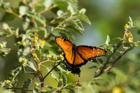 色とりどりの花に蝶や蜘蛛