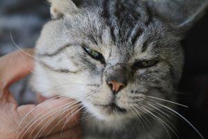 徳川家康のお墓の受付にいる猫