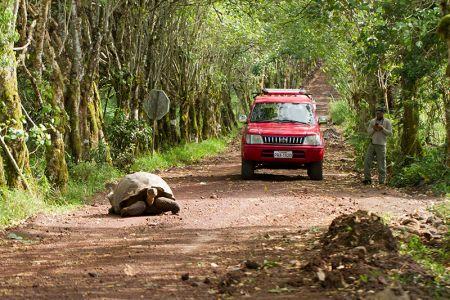 農園に行く道ではゾウガメが最優先、車は彼らが通りすぎるまで待たねばならない