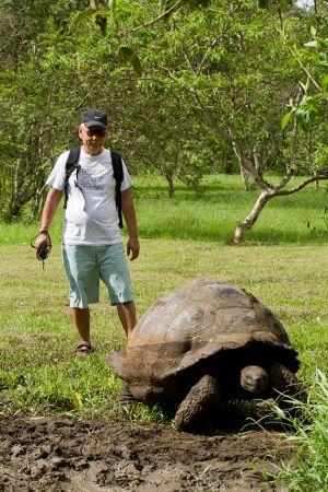 サンタクルズ島の農園で野生のゾウガメの大きさにびっくりの矢田さん