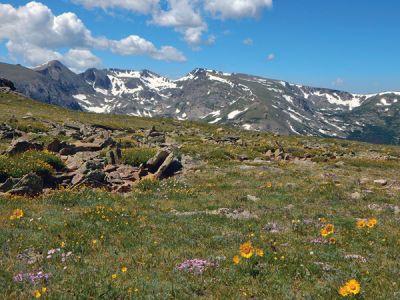 暖かい季節になると、国立公園では色とりどりの高山フラワーを楽しめる