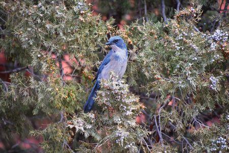 ガーデン・オブ・ザ・ゴッドのガイドツアー中に出くわした、きれいなブルーの野鳥