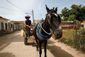 キューバでは馬車もよく見かける。自然と共に生きる人々にとって牛馬は大切なパートナー