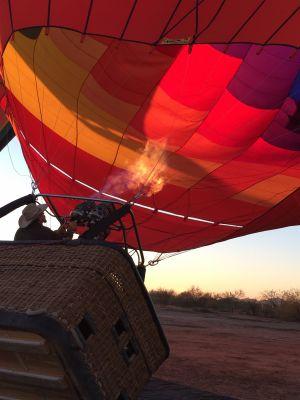 日の出とともに、炎をシュートしながら熱気球をふくらませるクルー