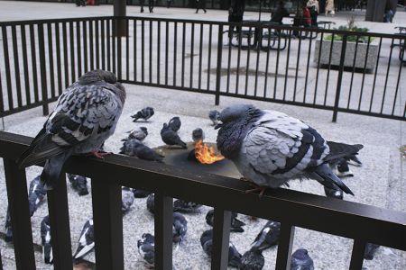 デイリー・プラザにある、ハトが独占する「暖炉」