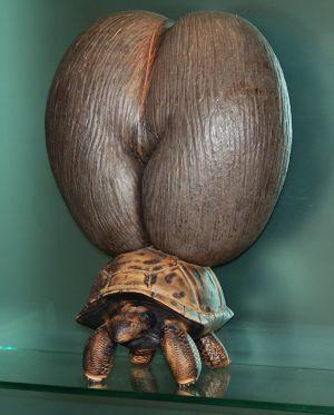 セイシェル名物、ココ・デ・メアとゾウガメを組み合わせたアート