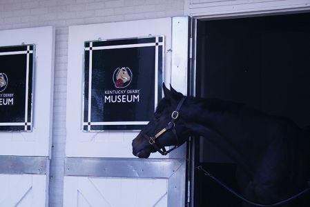 引退したダービー馬も暮らしている