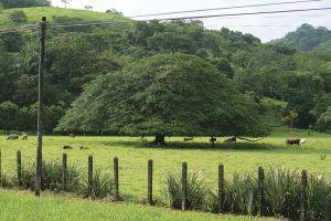サバンナにあるような木