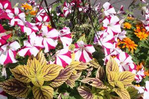 ガーデニング好きの住民が多く、ドアー・カウンティーにはきれいな花がいっぱい植わっている