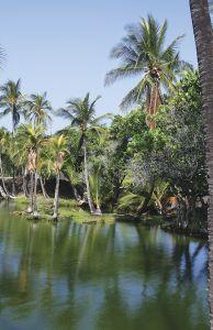 緑色に輝く、古代ハワイの養魚池