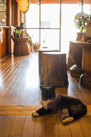 廊下でくつろぐ猫