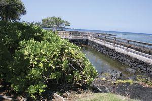 ナオパカが生い茂る、マウナラニの海岸