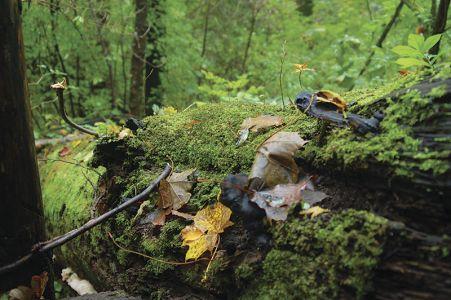 雨に濡れで発色がよくなった、木の葉や落ち葉 =パプク国立自然公園