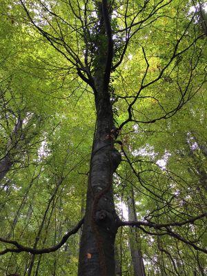 パプク国立自然公園の、美しい木立