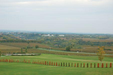 セルビアとクロアチアの国境付近に広がるぶどう畑