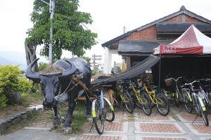 池上の貸し自転車屋。なぜか牛がテントを引っ張っている