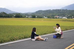 黄緑色の稲の波。田んぼの中では、撮影会やピクニックも