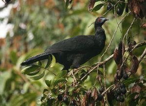 サベグレの森には、ケッツァール以外にも色とりどりの鳥が生息している