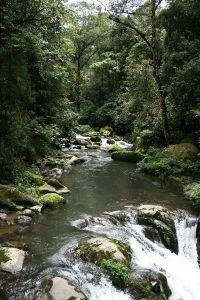 コスタリカ有数の清流、サベグレ川