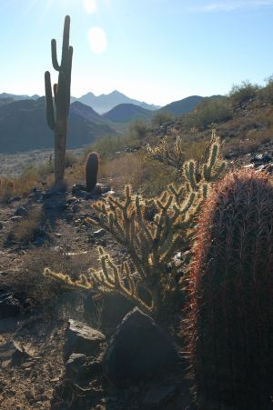 「Phoenix Mountains Preserve」のハイキング・トレイル