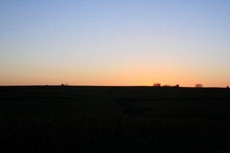 夕暮れどき、トウモロコシ畑がピンクに染まる