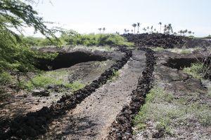 マウナラニの敷地内には古代ハワイのトレイルが残る