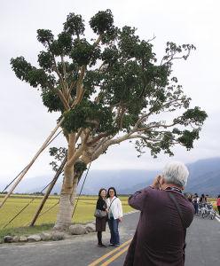 金城武の木の前で、自転車をとめて記念撮影する人たち