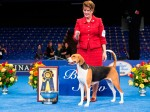 SeeSpotRun Photo at The National Dog Show Presented by Purina