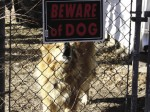 barking-dog-with-bewar_opt-650x330