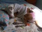 悲しいながらも愛おしい愛犬ジュリエットのおむつ姿 Photo © Maho Teraguchi