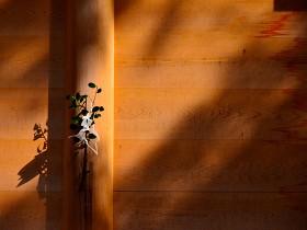 Photo © Naonori Kohira