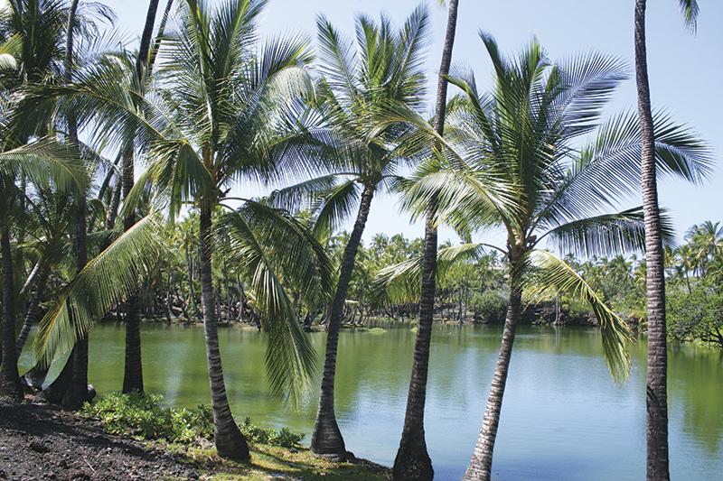 古代ハワイの養魚池 Photo © Mirei Sato