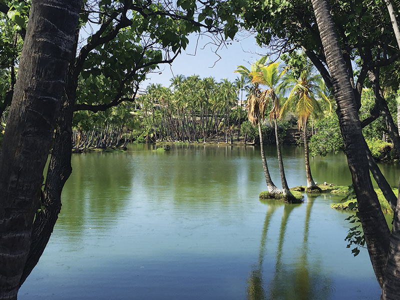 緑色に輝く、古代ハワイの養魚池 Photo © Mirei Sato