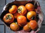 収穫した柿 Photo © Chizuko Higuchi