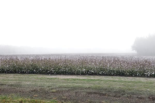 南部の綿花畑の中を走って行くPhoto © Yoshifumi Kawabata
