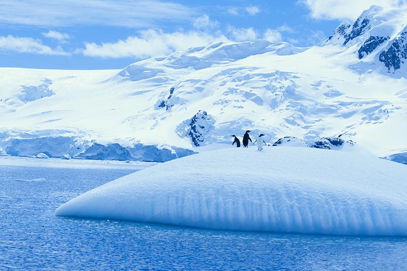 南極の「Destiny's Child」=7日目 Photo © Mirei Sato