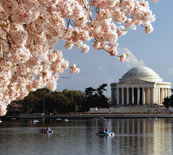 タイダル・ベイスンでボートに乗って花見をする人たちNational Cherry Blossom Festival