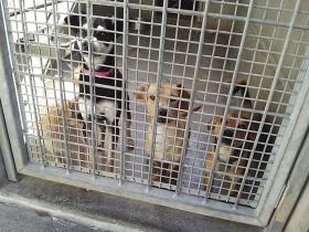 この世の中からホームレス犬がいなくなることが願い Photo © Maho Teraguchi