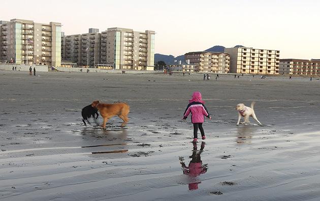 シーサイドのビーチには、宿泊客と共にワンちゃんも集合 Photo © Michiko Ono Amsden