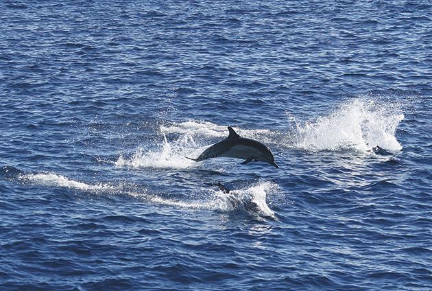 勢いよく跳ねるイルカ Photo © Mirei Sato