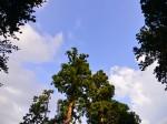 一言主神社から見上げた空 Photo © Naonori Kohira