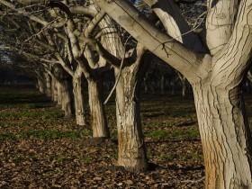 orchard-1149536_640