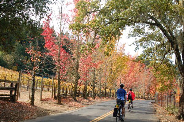 ワイナリーに囲まれた道路を、自転車で駆け抜けるPhoto © Mirei Sato