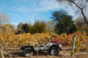 古い軍用ジープがある「Martorana Family Winery」Photo © Mirei Sato