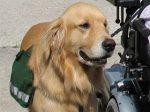 service-dog-1396291-2